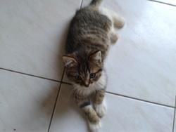 Chausson O'Pom, chat Gouttière