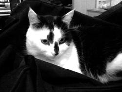 Chaya, chat Gouttière