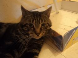 Cheperd, chat Gouttière