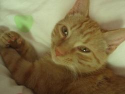 Chéri, chat Gouttière