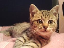 Cherry, chat Gouttière