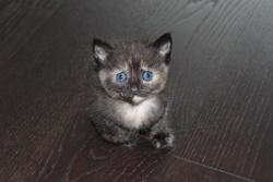 Chewie, chat Gouttière