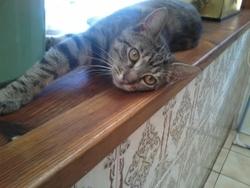 Cheyenne, chat Gouttière
