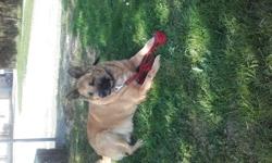 Cheyenne, chien
