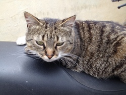 Chi Bouloute, chat