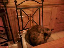 Chiara, chat Gouttière