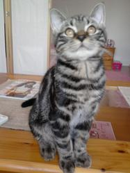 Chichou, chat Gouttière