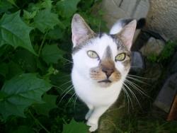 Chico, chat Gouttière