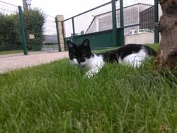 Chifoumi, chat Gouttière