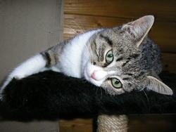 Chine, chat Gouttière