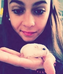 Bounty, rongeur Hamster