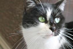 Chipounette, chat Gouttière