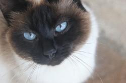 Chippy, chat Gouttière