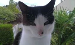 Chipy, chat Gouttière