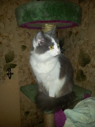 Chistera, chat Gouttière