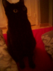 Chloé, chat