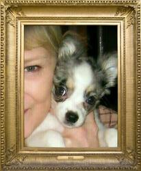 Chloe, chien Chihuahua