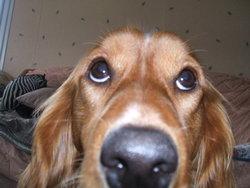 Chloé, chien