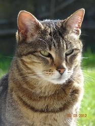 Chloe, chat Gouttière