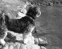 Chloé Rip Mon Amour, chien