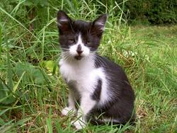 Choco, chat Gouttière