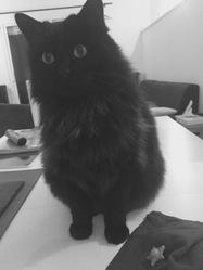 Chocolat, chat Gouttière