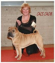 Choubaye Du Val Des Genets, chien Shar Pei