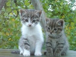 Chouchou Et Mimi, chat