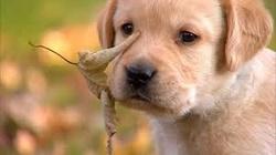 Chouchoutte, chien