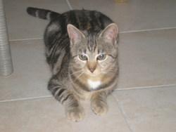 Choulette, chat Gouttière