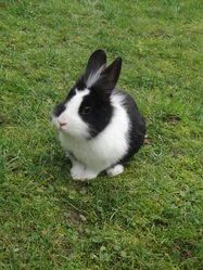 Choumy Star, rongeur Lapin