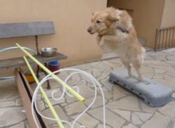 Choupette, chien