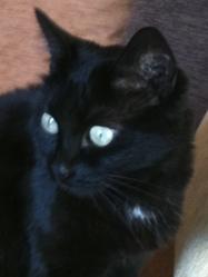 Choupette , chat Gouttière