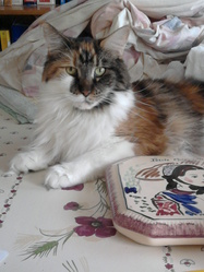 Choupette, chat Maine Coon