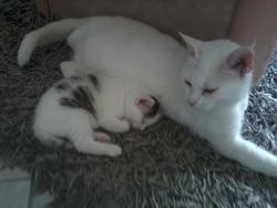 Choupette, chat Gouttière