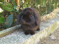 T'choupi, rongeur Lapin