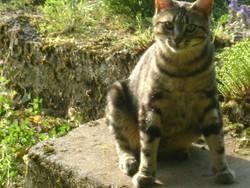 Choupi, chat Gouttière