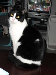 Choupie, chat Gouttière