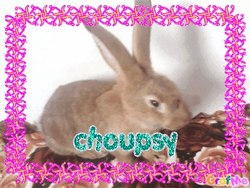 Choupsy, rongeur