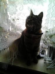 Choupy, chat Gouttière
