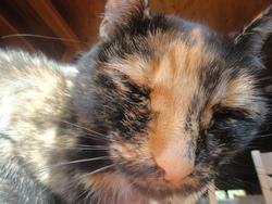 Chouquette, chat Gouttière