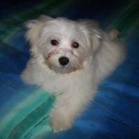 Chouquette, chien