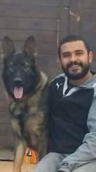 Choy, chien Berger allemand