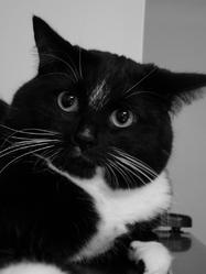 Christophe, chat
