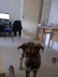 Chrystal, chien