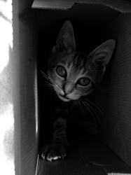 Chuck, chat Gouttière