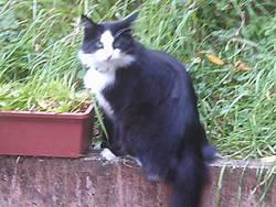 Chypie, chat Gouttière