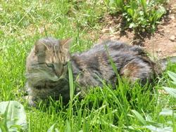 Citrouille, chat Gouttière
