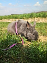 Ckrunch, rongeur Lapin