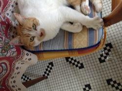 Clémentine, chat